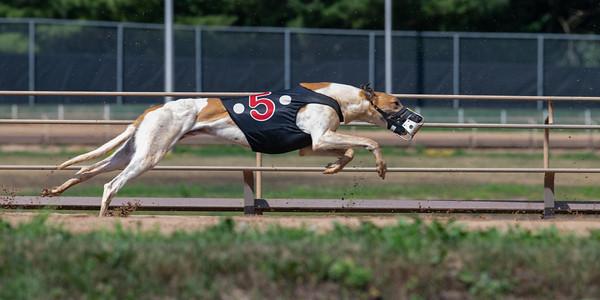 Iowa Greyhound Park - 1 July 2021