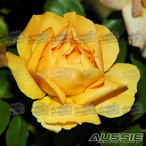 2008 Rose Garden