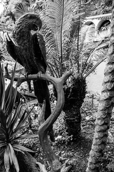 2016-01-22-29 Madeira-6010.jpg