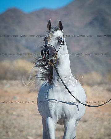 Lucho Guimarães Arabians