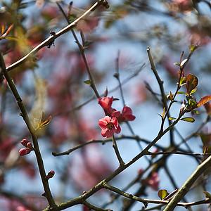 Des fleurs qui grimpent aux arbres ...