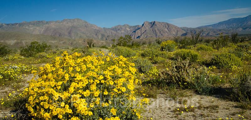 Yellow Flower Field  - YFF-1