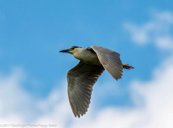 day 4 So FL Birding-257