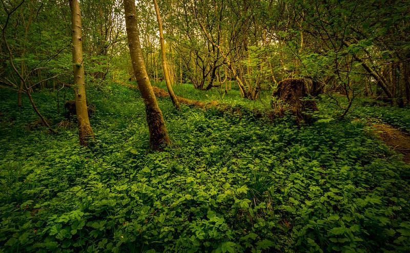 Forest Shadows-089.jpg