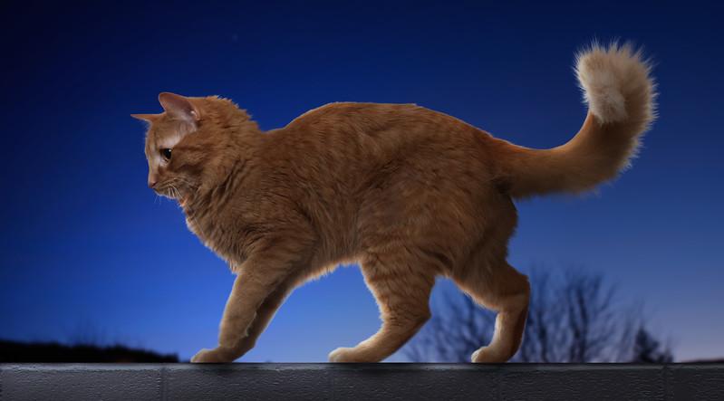 Orange-cat-13.jpg