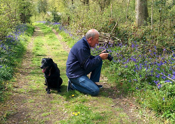 An amble round Bonsley Wood to see the Bluebells