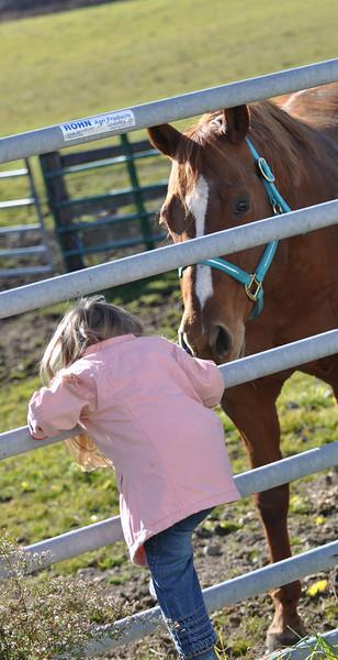even big horses like little girls