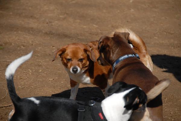 2012-03-11 Central Park Dog Park