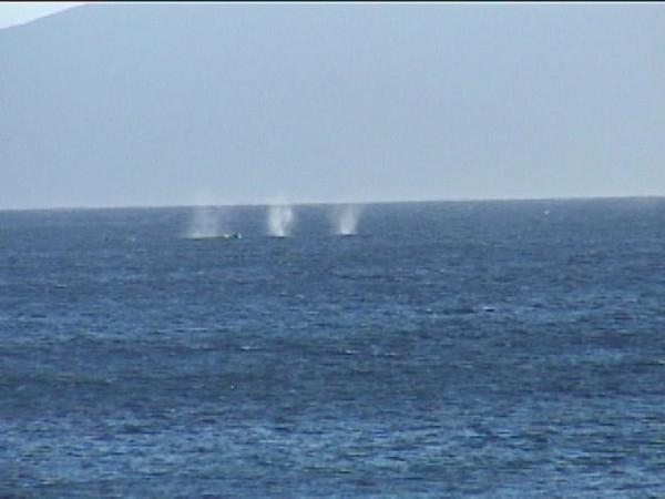 3 whale spouts.jpg