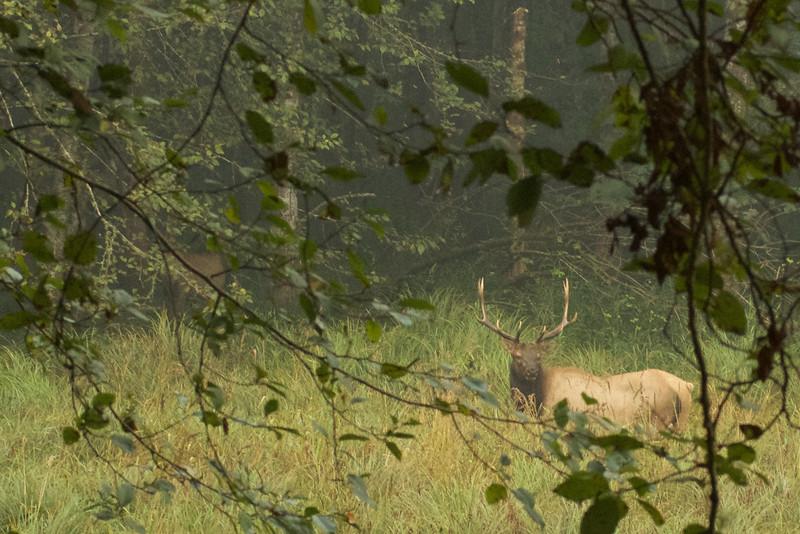 Deer, Doe, Buck