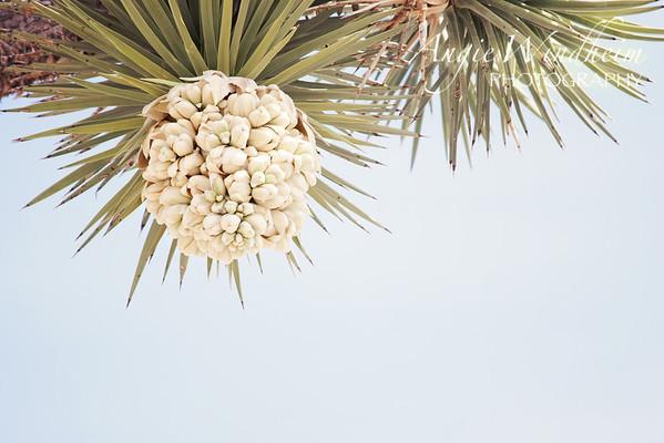 Palm Desert and Joshua Tree
