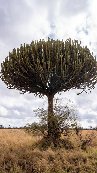 Tanzania-Tarangire-National-Park-Safari-03.jpg