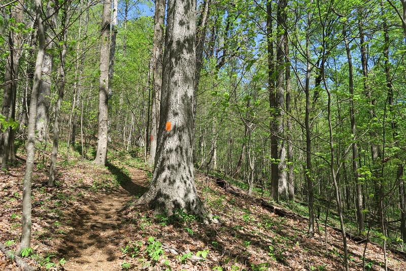 Ridge Trail - 2,550'