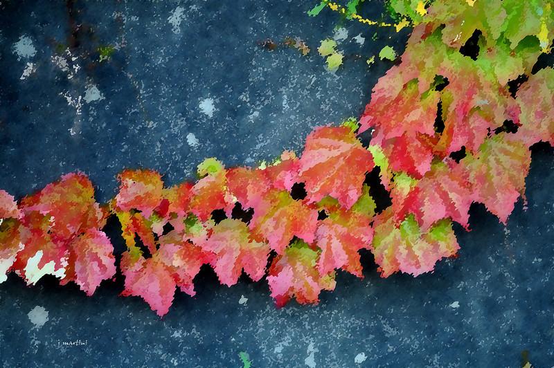 red vines 2-11-2011.jpg