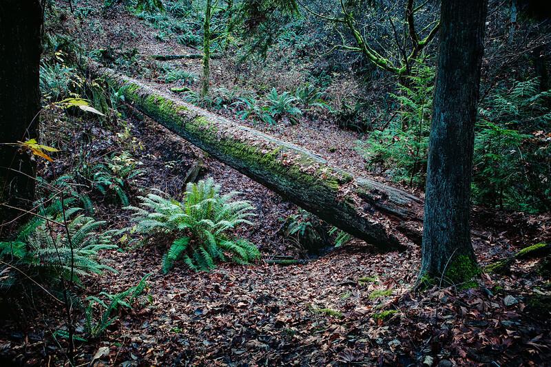 Schmitz Park, West Seattle