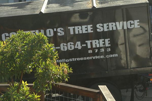 Costello's Tree Service