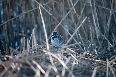 Diverse Fugle