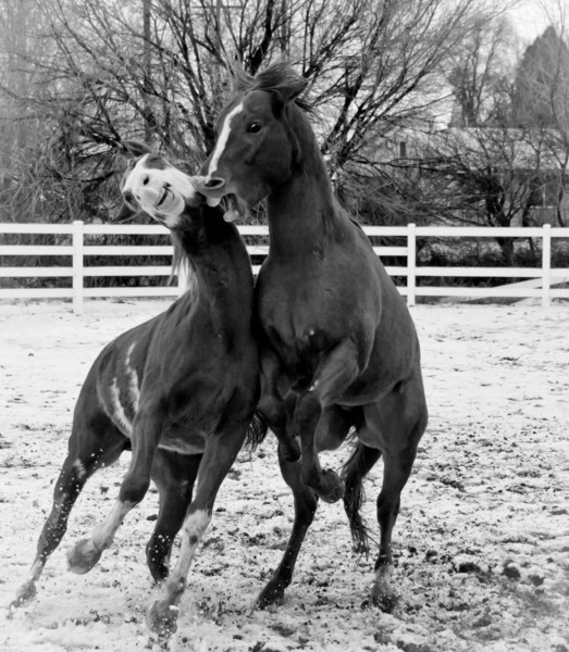 Rumblin Stallions IV