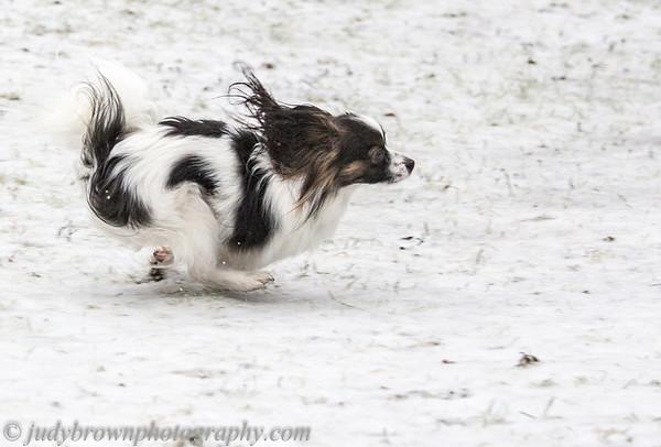 Merlot on the Run 1213