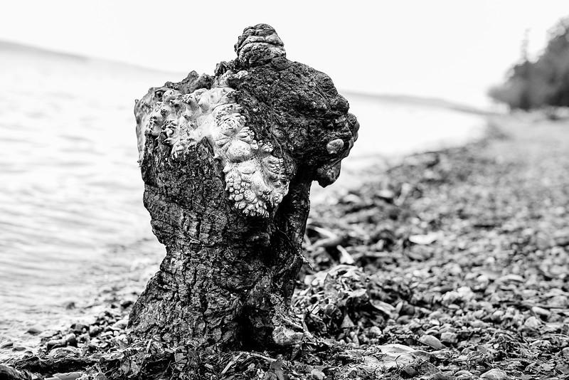 Torso on the Beach