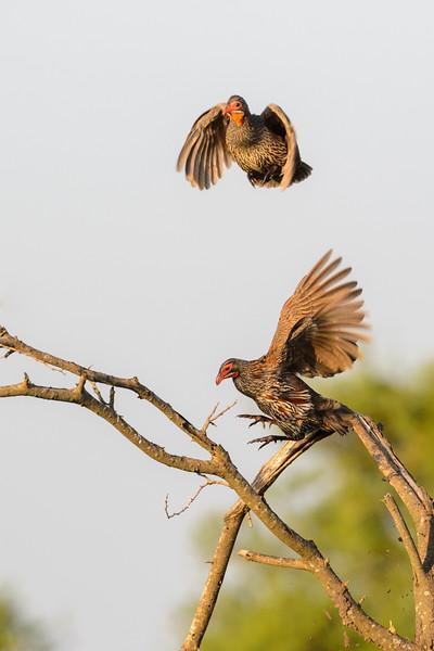 20160216__KET8535_Serengeti_Day_8.jpg