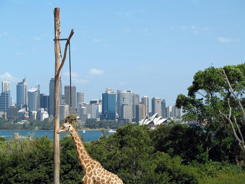 Australia 022.jpg