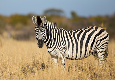 Nature 2015 All Safari Animals