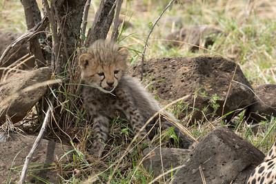2017 Masai Mara (Kenya)