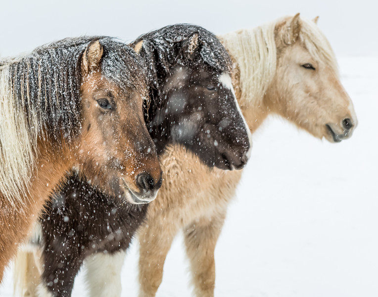 What's a little snow among friends