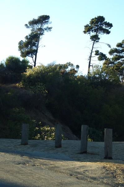 ElysianPark023-TreesAndDirtRoadOffAngelsPointRoad-2006-10-18.jpg
