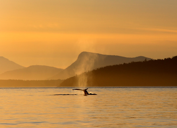 Whalewatching, Haro Strait, San Juan Islands