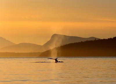 Whalewatching, Haro Strait, San Juan Islands