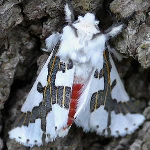 Moths - 2019