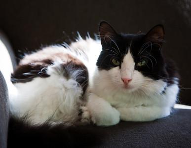 Cats, May 2009