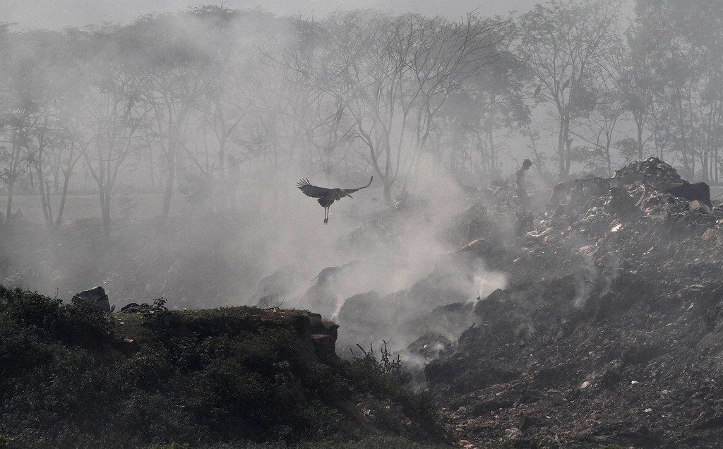 . A Greater Adjutant Stork flies by a ragpicker looking for recyclable items at a garbage dump on Earth Day, on the outskirts of Gauhati, India, Tuesday, April 22, 2014. (AP Photo/Anupam Nath)
