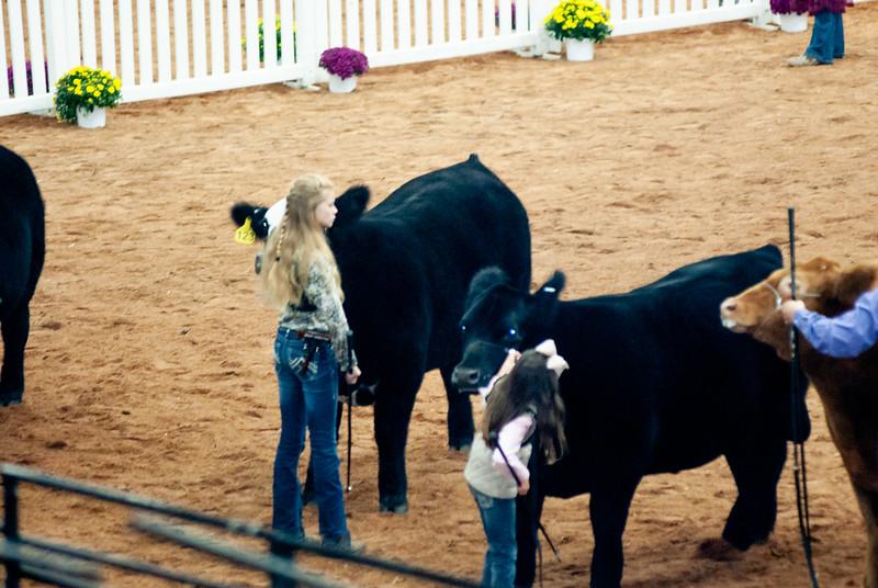 american_royal_cattle-27.jpg