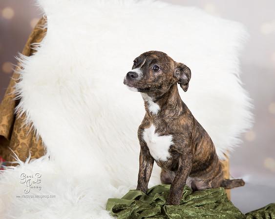 Miss Winkles Adoptable Pups