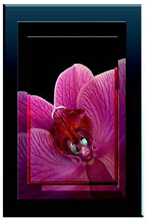 DSC_4318 Baby Orchid.jpg