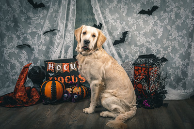 Masters N Dogs - Too Cute to Spook - 19.10.2019