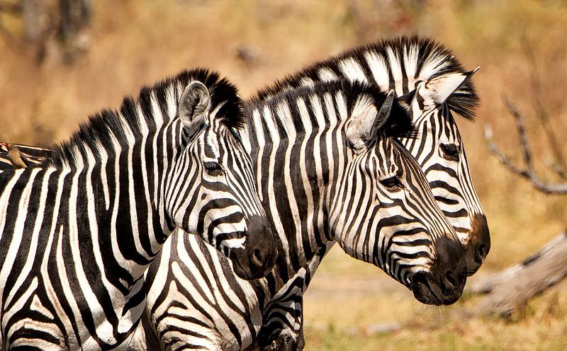 2014-08Aug-Okavango Masters-32-Edit.jpg