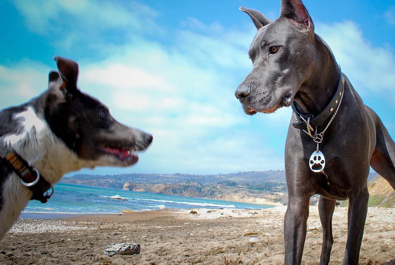 dogs_beach-091.jpg