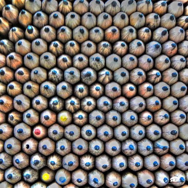 Crayons Wilo-2.jpg