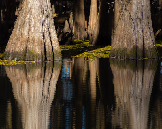 Caddo Lake Refections 2020
