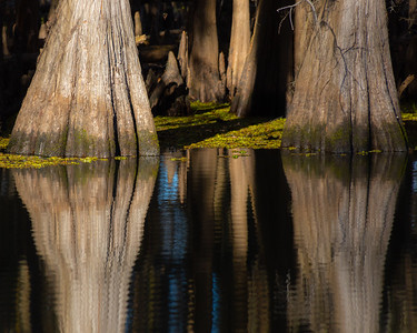 Caddo Lake Refections 2020