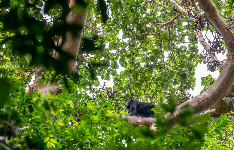 Uganda_T_Chimps-193.jpg