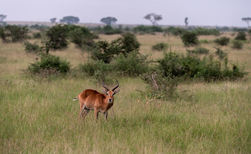 Uganda_T_QE-946.jpg
