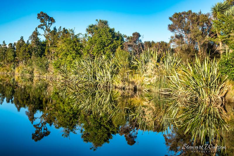 Native bush reflections
