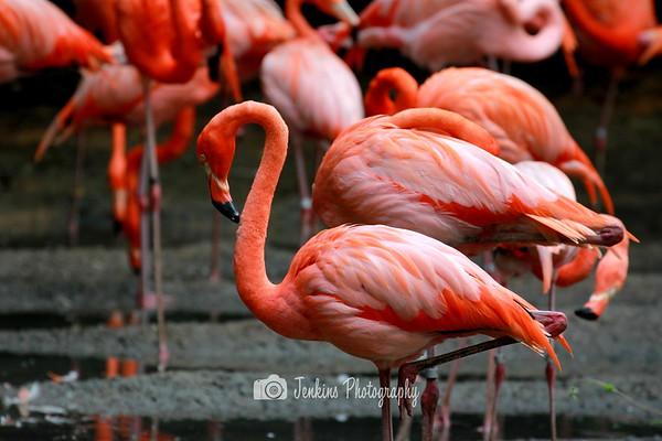 2012-04-29 Jurong Bird Park