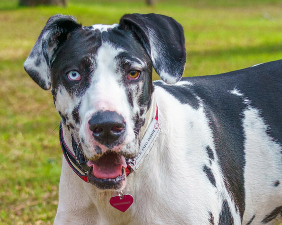 Marilyn Manson, a Great Dane