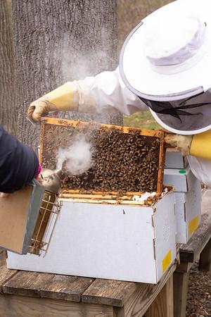 Bees & Things